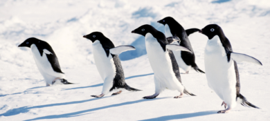 google-update-penguin-4.0